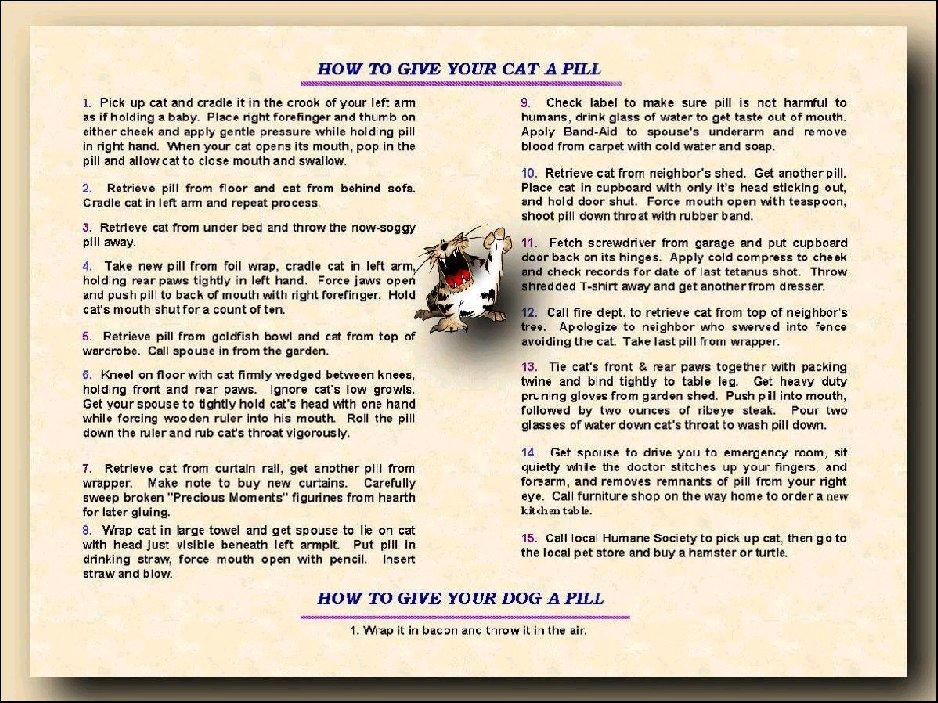 Cat Pill Image